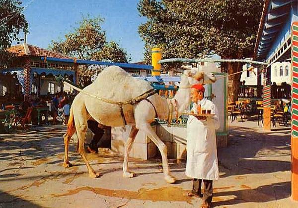 - Tunis La Marsa- bien partis avec une bonne affluence-Layali Saf Saf offrent un programme original et varié 3