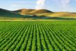 Au sein de la région de Siliana, l'Etat récupère 562Ha des terres domaniales agricoles