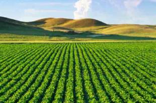 Agri-tech : un nouveau projet pour développer les exportations de 5 startup tunisiennes au Sénégal