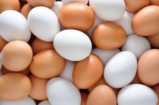 Le ministère du Commerce fixe le prix plafond et la marge bénéficiaire des œufs et des poissons