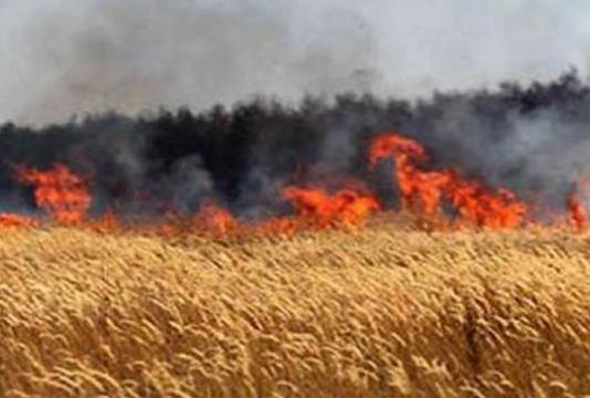 Incendies des forêts : forte hausse des surfaces brûlées en 2021 par rapport à 2020
